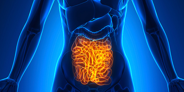 2015_04_02_GastrointestinalCancer_SmallIntestines_web_iS_000053419688