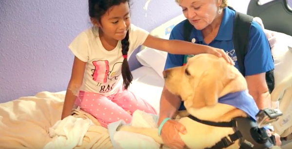 Patient petting an Orlando Health pet therapy dog.